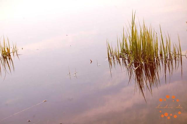 Nocietinājuma dambja radīta ūdenskrātuve Liepājā