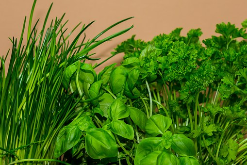 fresh growing herbs of chives, basil , parsley