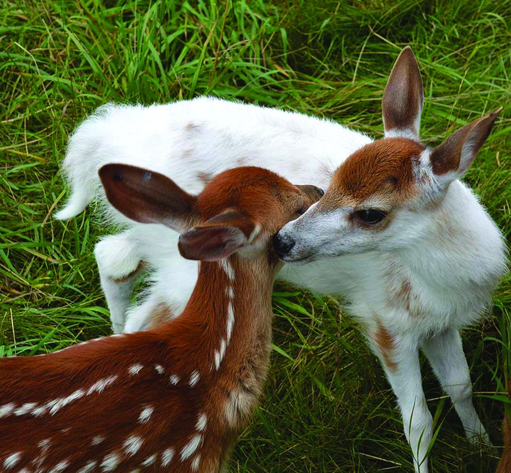 Risultati immagini per Maine Wildlife Park