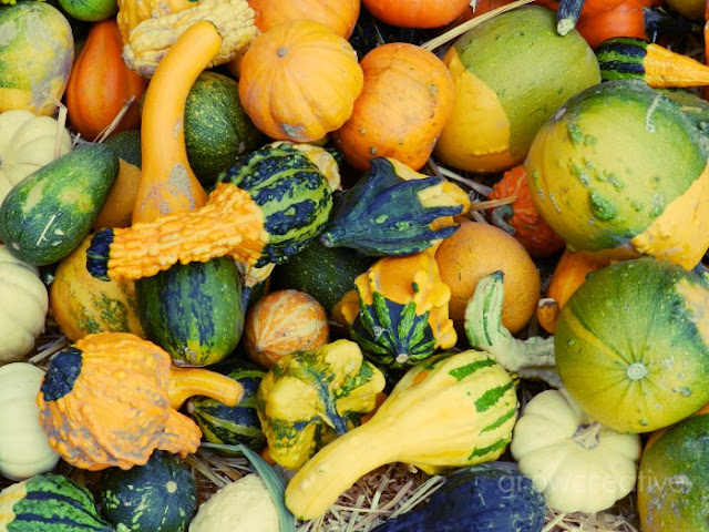 orange, green, and yellow decorative gourds