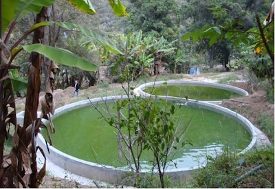 picture of earthen concrete fish pond fishpond