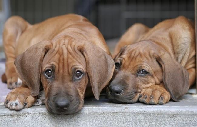 Sprzedaż psów w Polsce