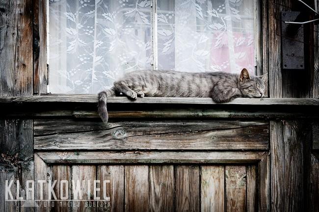 Jelenia Góra: kot dachowiec jak dzisiaj Klatkowiec