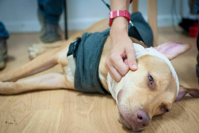 Benefits of Dog Massage for Dogs with Arthritis & Other ...