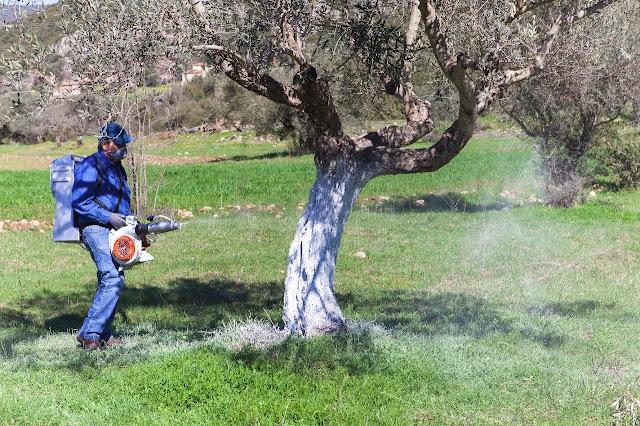 Ηγουμενίτσα: Πρόγραμμα B΄ ψεκασμού για την καταπολέμηση του δάκου της ελιάς έτους 2018