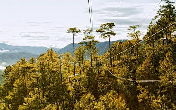 What's Unique at Tree Top Adventure?