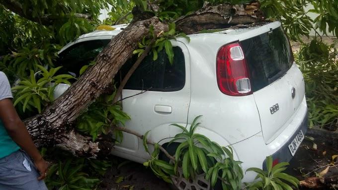 Árvore cai no centro de Chapadinha.