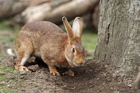 facts about Hares