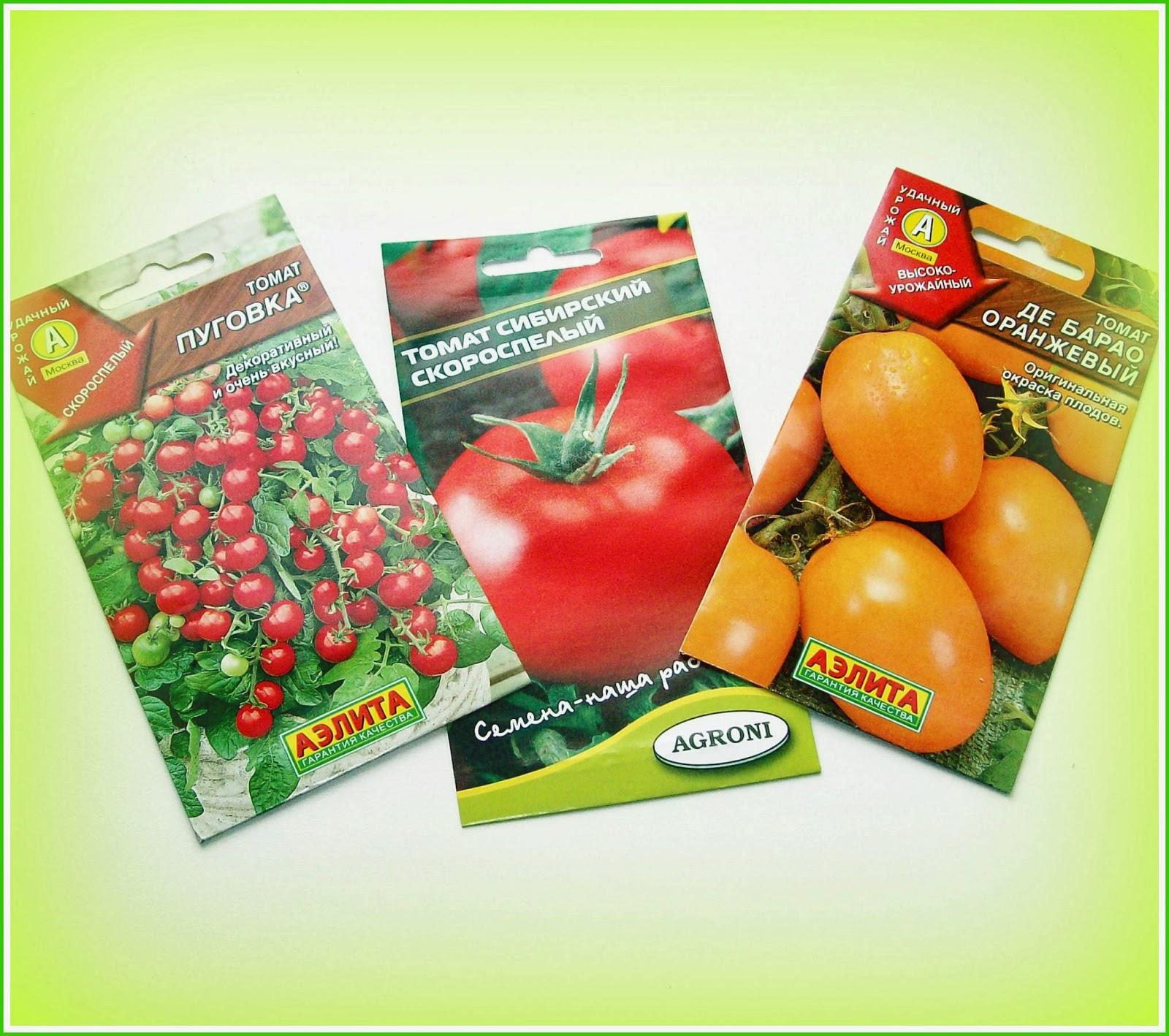семена томатов, посаженные впервые
