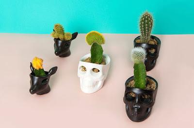 Florero para cactus