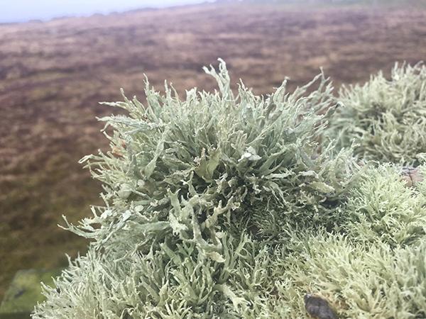 A Wirral birders blog: Fair Isle 2016. Part 3.