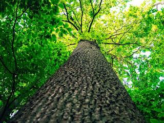 textura, tronco árbol, ramas, vista