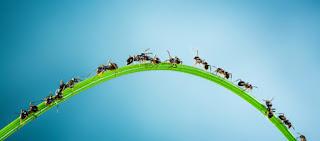 http://www.thoharianwarphd.com/2017/07/percobaan-sains-membuat-koloni-semut.html