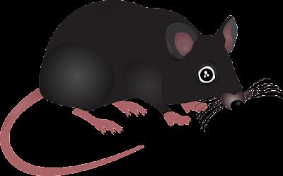Cara Membasmi dan Mengusir Tikus di Rumah