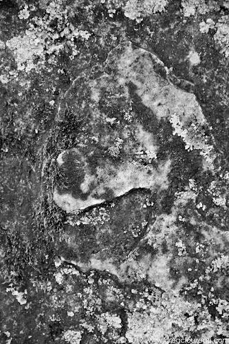 Le sourire de Pluto, Fontainebleau