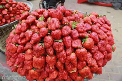 strawberry gaza, strawberi terbaik dunia,israel