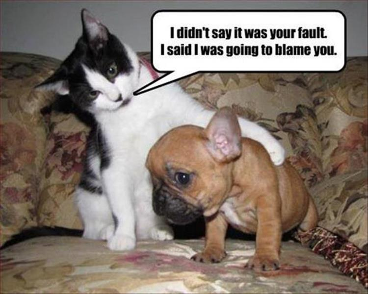 30 Funny animal captions - part 45, animal photo with caption, best captioned animals