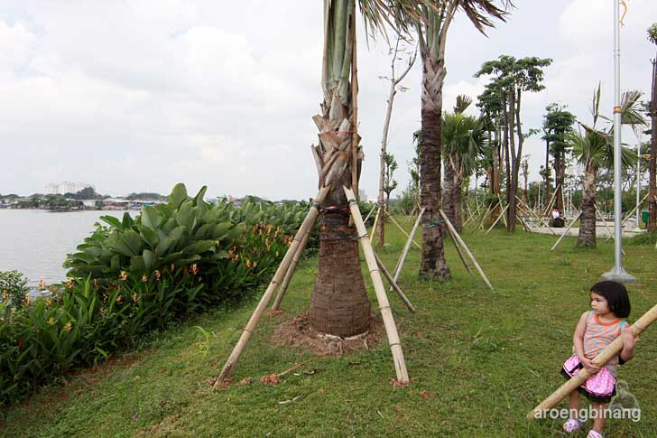 pohon palem taman kota ria rio jakarta