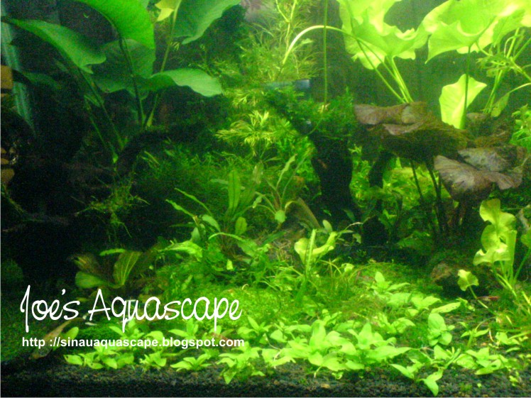 Aquascape tanpa CO2 Injection ~ Simple Aquascape