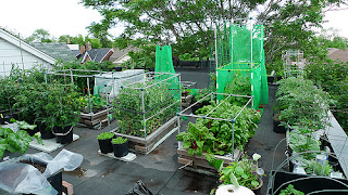 gardening ideas in india