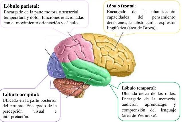 Dolor en el lóbulo frontal significado