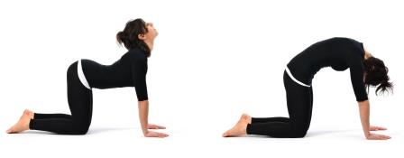 Marjarasana - Simple Yoga Workout for Body Slimming
