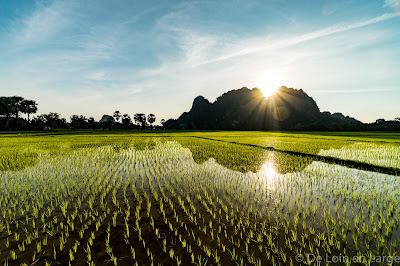 Rizières - rice fields - Hpa An