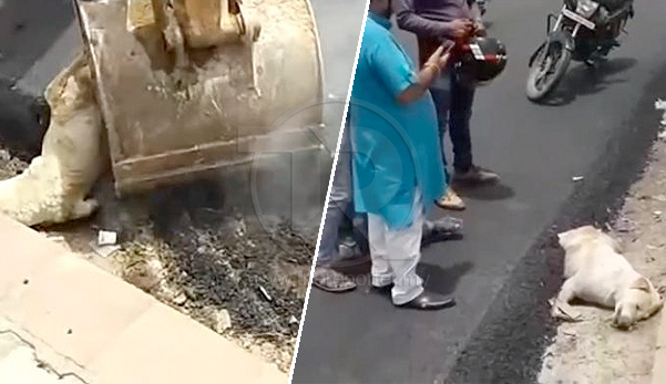 (Video) Anjing tidur tepi jalan pun kena tar sekali