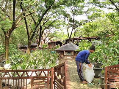 Taman Wisata Mangrove Pantai Indah Kapuk