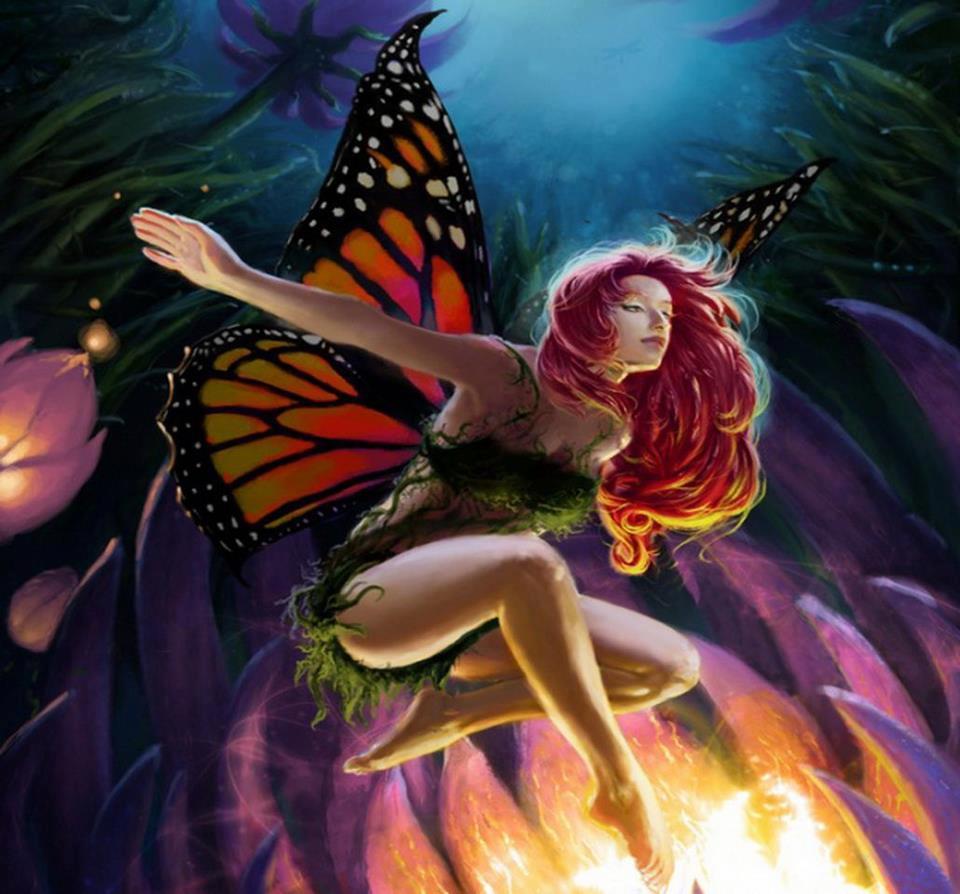 National Geographic Wallpaper Fall Mariposas Fantas 237 A Vol 5 20 Fotos Imagenes Y Carteles