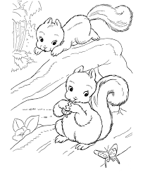 Printable Squirrel Coloring Pages Online