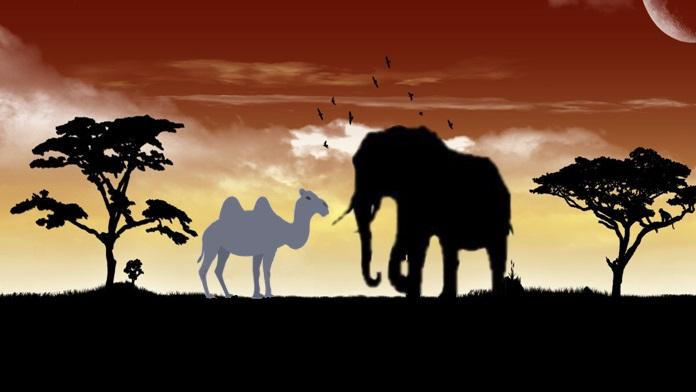 Elefanti e cammelli hanno buona memoria