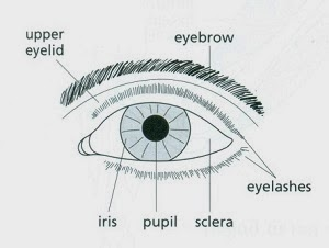 you need to be able to label parts of the eye on diagrams