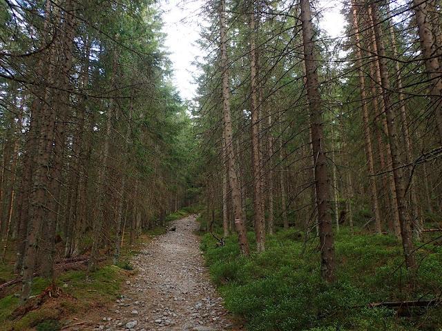 W górę Doliny Pańszczycy przez las