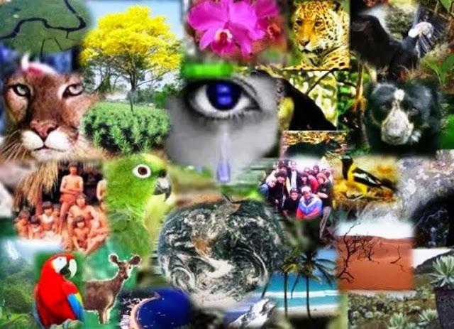 O estudo da Ecologia na Biologia