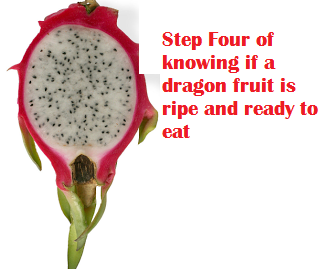 Step Four of knowing if a dragon fruit is ripe and ready to eat