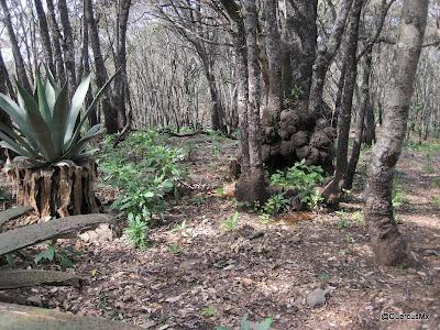 Caprichos de la naturaleza en Cerro Viejo
