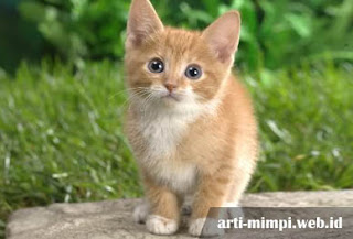 Arti Mimpi Melihat Kucing Sebagai Suatu Pertanda