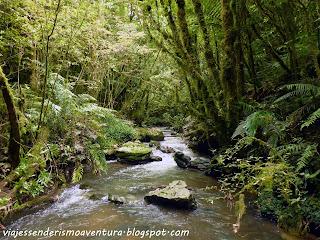 Cuevas de Waitomo - Una auténtica selva a la salida
