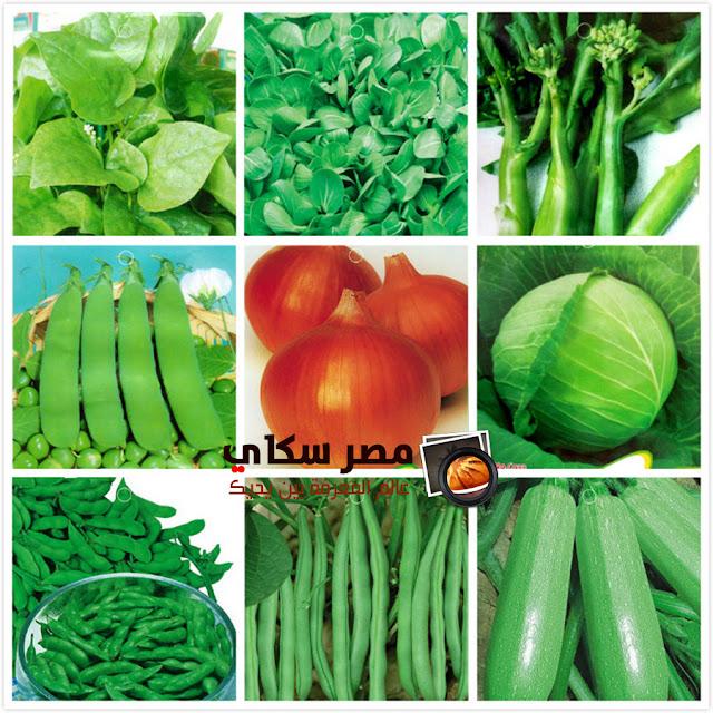 مم تتكون الأغذية الشعبية وماهى فوائدها Popular food
