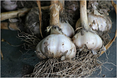 July 23, 2018 Harvesting the garlic in our small garden
