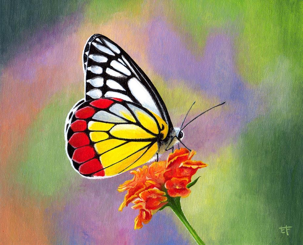 Eric F Artiste Peintre Peinture Acrylique Papillon Delias Hyparete