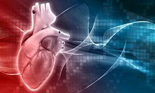 Sistem kardiovaskular dapat dianggap sebagai sistem transportasi tubuh. Sistem ini memiliki tiga komponen utama: jantung,pembuluh darah dan darah itu sendiri.