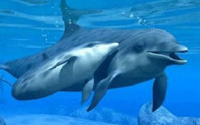 Preciosa imagen de mama delfin con su cria bebe