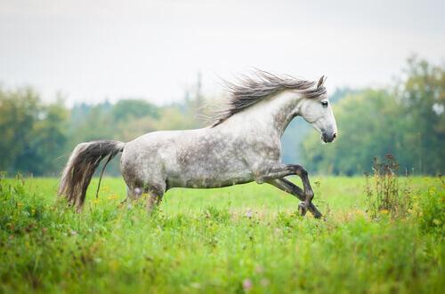 Let there be light il ricordo di un cavallo - Avere un cavallo ...