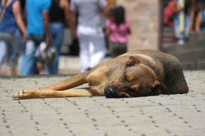 a dog sleeping in the street