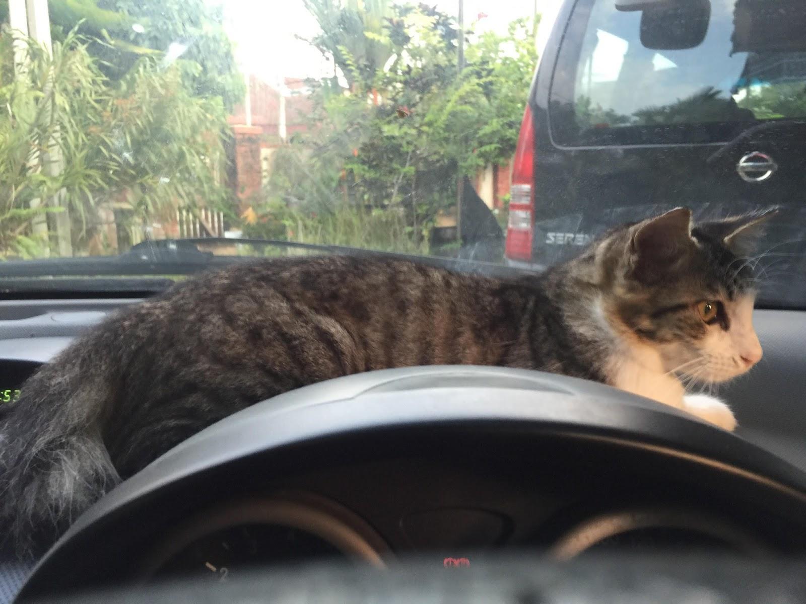 Bila Dah Terlebih Manja; kucing saya