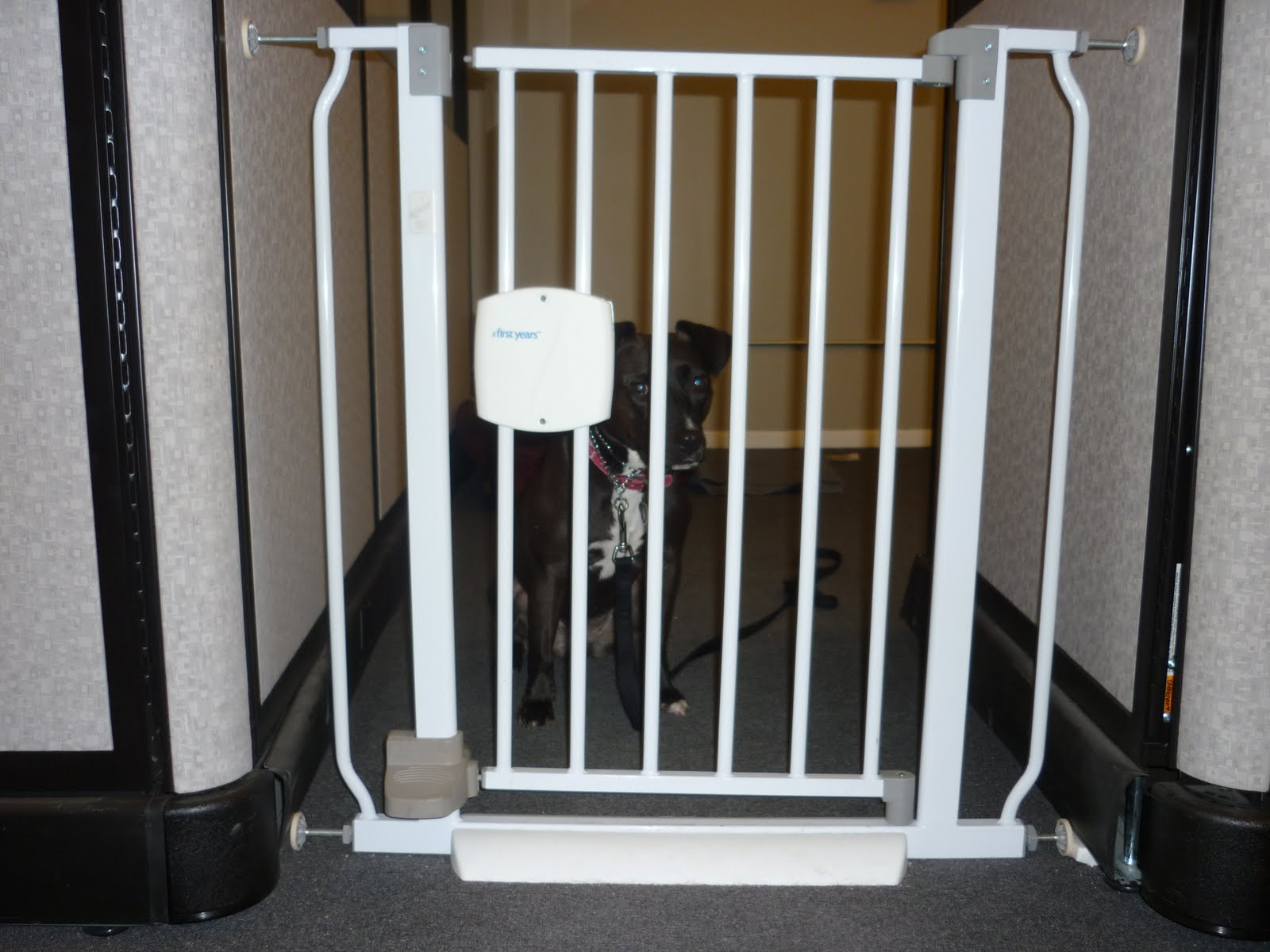 Pressure Mounted Dog Gates For The House Home Improvement