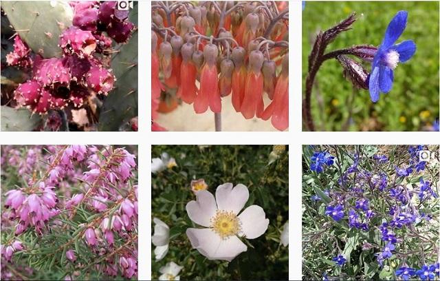 Plantas en Instagram, tumblr y pinterest