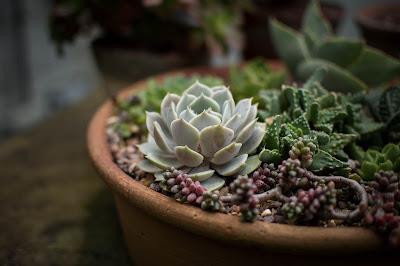 Magiczny świat roślin Facebook